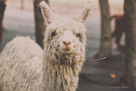Shabby Alpaca by Melissa Hanley art print