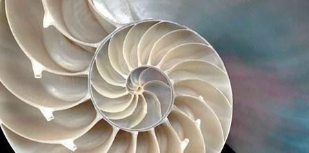 Nautilus by Andrew Levine art print
