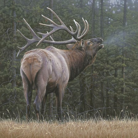 Broken Silence - Elk by Daniel Smith art print