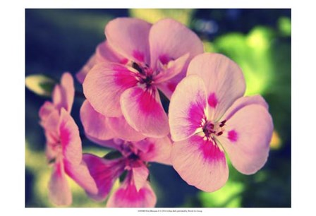 Pink Blossom II by Lillian Bell art print