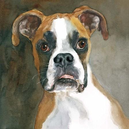 Bella Boxer by Edie Fagan art print