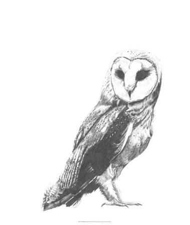 Wildlife Snapshot: Owl by Naomi McCavitt art print