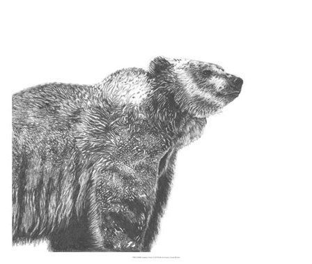 Wildlife Snapshot: Grizzly by Naomi McCavitt art print