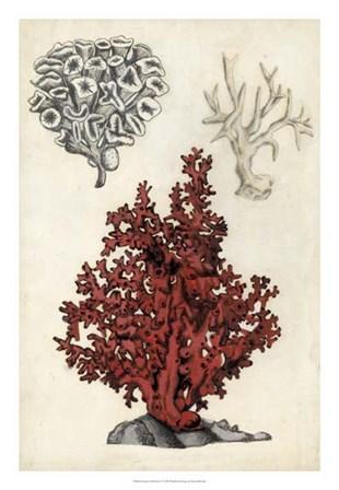 Seashore Field Notes V by Naomi McCavitt art print