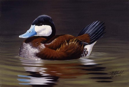 Ruddy Duck by Wilhelm J. Goebel art print