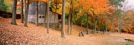 Trees On A Hill, Connecticut by Panoramic Images art print