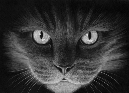 Hypno Cat by Stephen Ainsworth art print